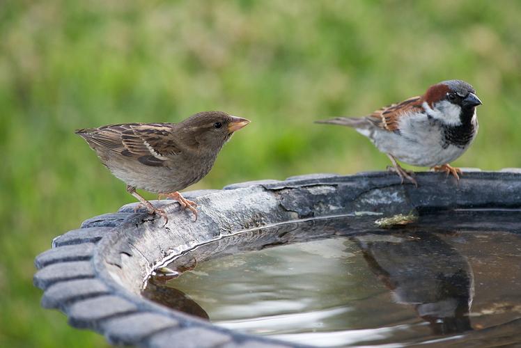 Remove Standing Water