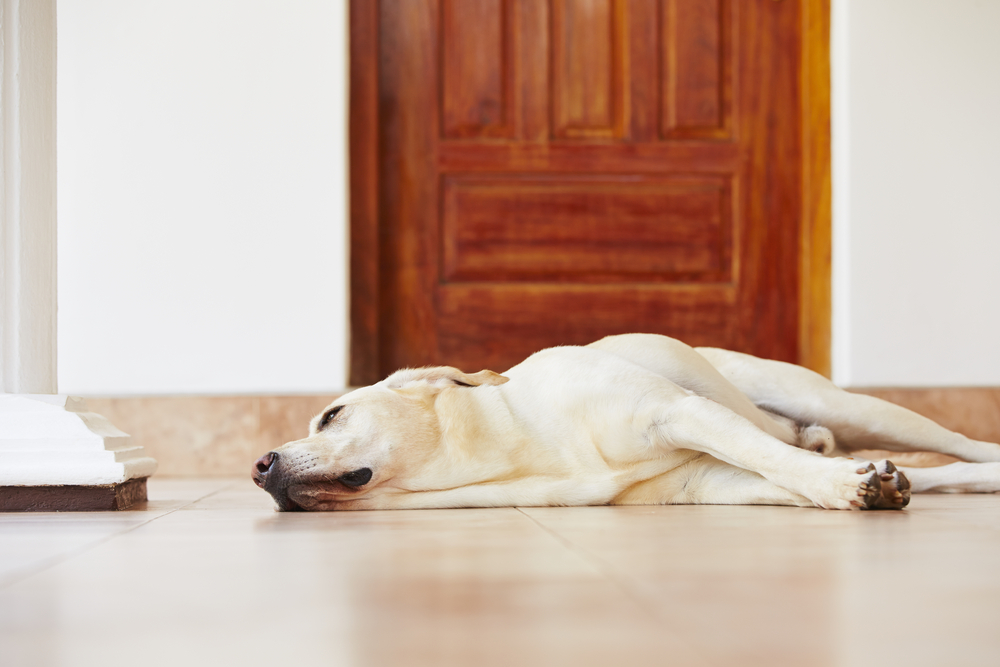 keep doors closed to prevent your dog damaging delicate furniture