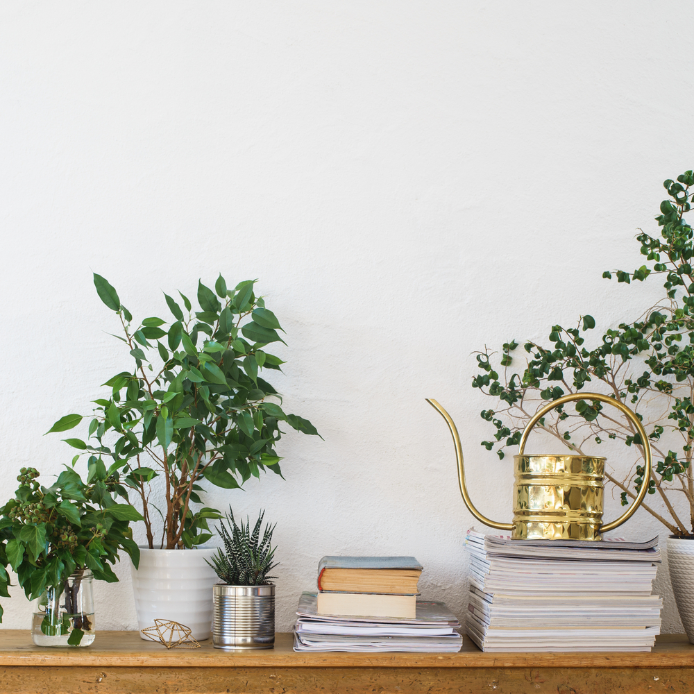 Move Plants which could make your children ill
