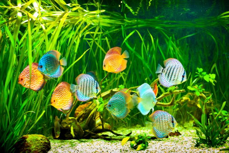 Pipeline Fish Tank