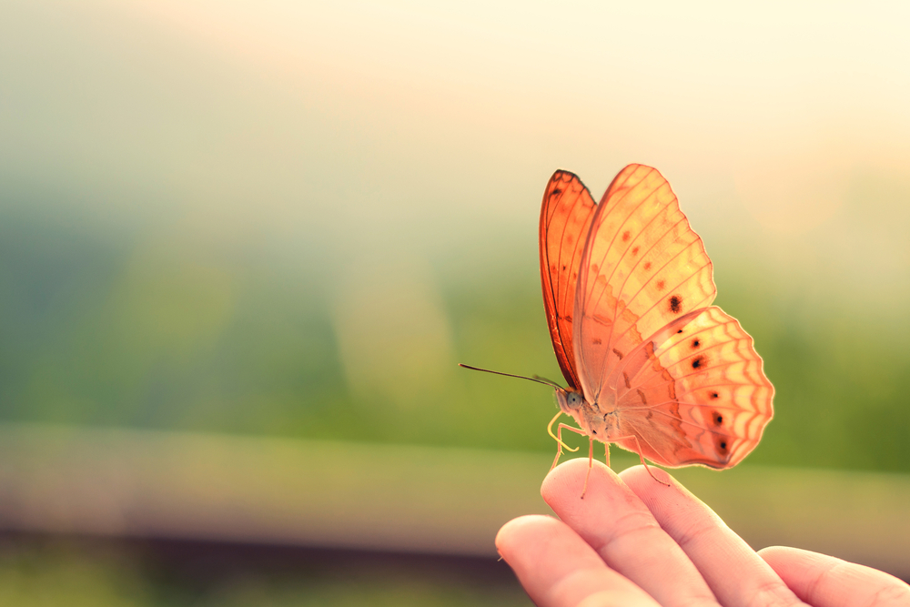 #12 Beautiful Butterflies