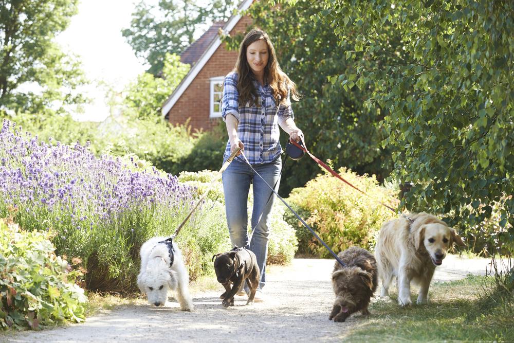 #7 Find a Trusty Dog Walker