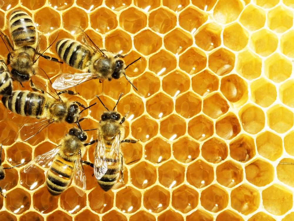 #3 Honey Bees