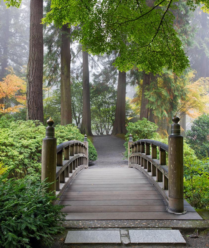 walk in a garden