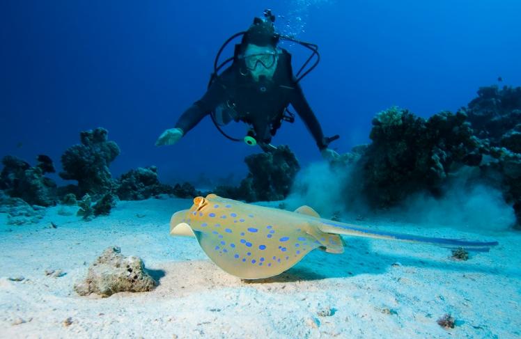 Hayman Island – Great Barrier Reef, Australia