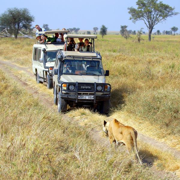 Serengheti, Tanzania