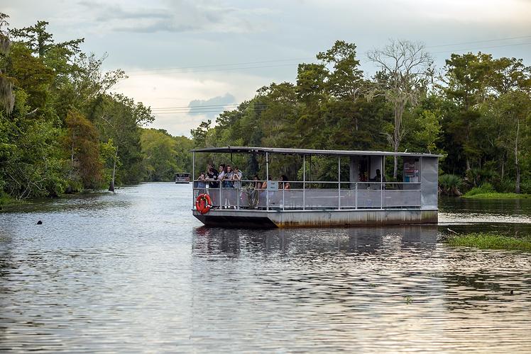 Swamp Tours
