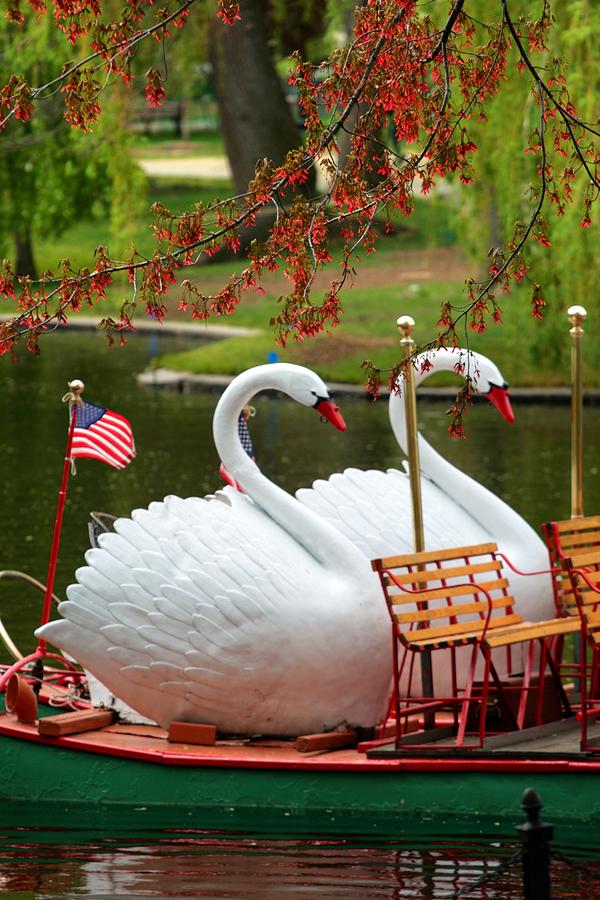 Boston Common and Public Garden