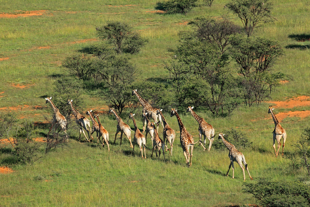 South African Tours and Safaris - Enjoy a lavish trip with Micato Safaris