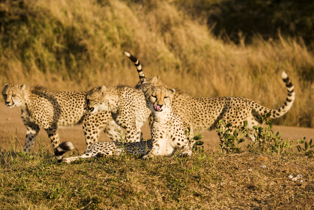 Fun for the whole family in Sabi Sands