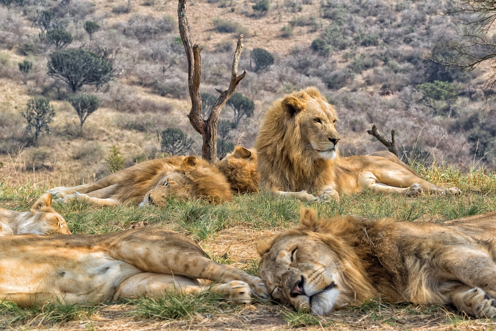 Let Abercrombie and Kent help you explore Kruger National Park