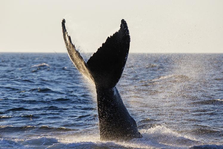 Whale Watching – Cape Cod, Massachusetts