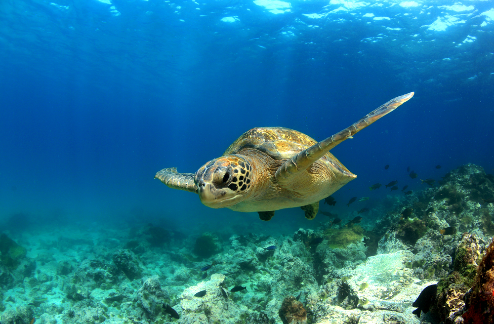 #4 Galapagos Islands