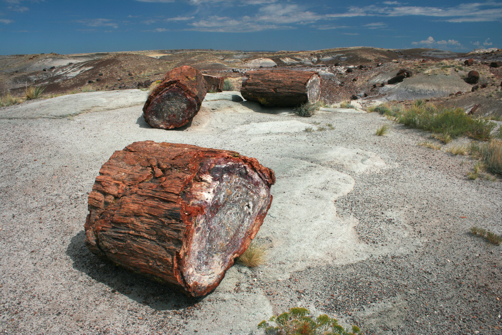 #2 The Petrified Forest, Arizona
