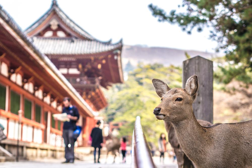 #9 Nara