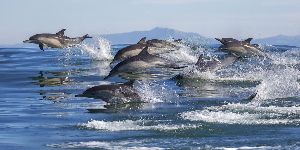 #8 Monterey, California
