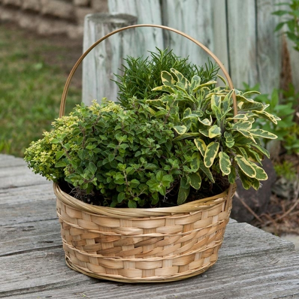 Herb Garden Container Ideas: 8 Ways To Create Your Own Herb Garden